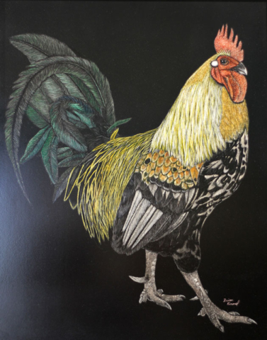 Maui artists picture it framed Brian Kimmel scratchboard Rooskie rooster